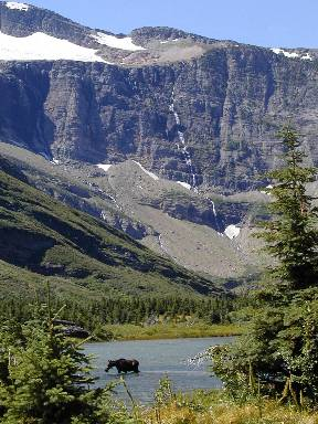 moose-at-glacier-national-park.jpg